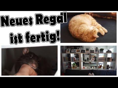 Das neue Regal! |  Zubehör meiner Tiere | Wie wasche ich meine Teppiche für die Ratten? | Vlog