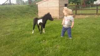 newborn miniature shetland foal gets friendly with young children!