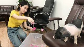 Vlog 01-Time to Take a Flower Bath   Ms Yeah's Daily life