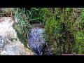 GOTAS DE AGUA, SONIDOS DE LA [video]