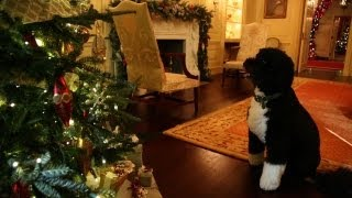 Bo Inspects the 2012 White House Holiday Decorations