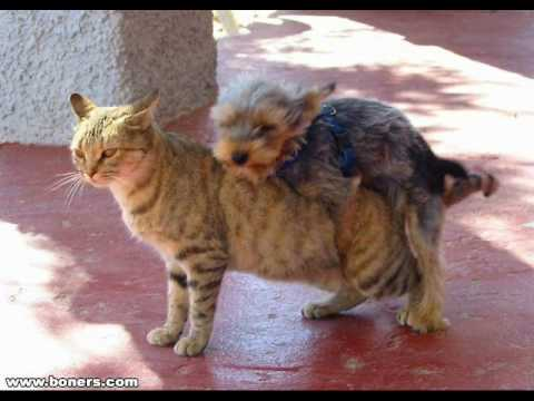 Cat Dog Crossbreed