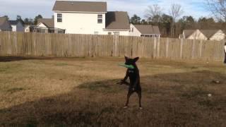 Nerf Legends dog trick catches 2