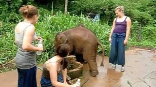Cutest baby elephant at Anantara