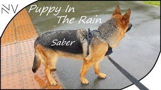 download lagu Walking German Shepherd Puppy In The Rain  Nerdvlog gratis
