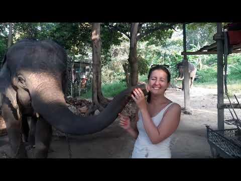 Elefánt-puszi