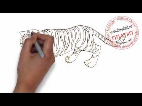 Видео как нарисовать тигра ребенку