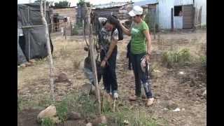 Sistemas de Micro-Riego IDEAL en Nicaragua
