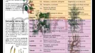 Enciclopedia de las Plantas Medicinales / Publicaciones Maná