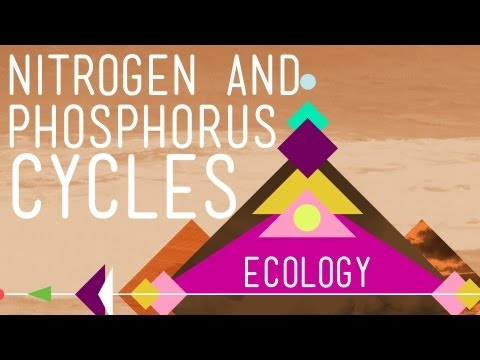 Nitrogen & Phosphorus Cycles: Always Recycle! Part 2 - Crash Course Ecology #9