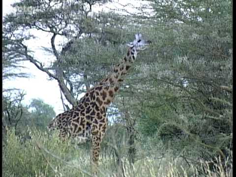 Kenya Overview - travel guide - Teletext Holidays