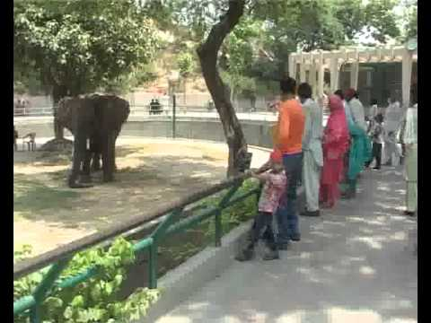 Children Rush Zoo Due Summer Vacations Pkg By Amir Dar City42