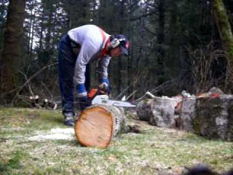Cutting up the fallen alder tree #5