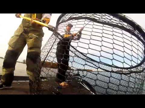 November Droppin - Fishing a drop shot on Lake Norman