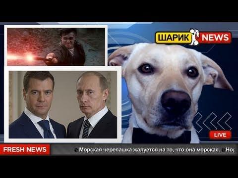 Шарик News - Гарри Поттер или выборы 2012