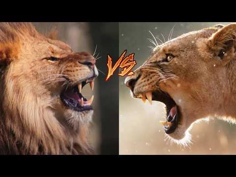 5 Самых свирепых битв животных