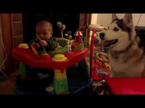 Baby Leo laughing at Husky Cosmo