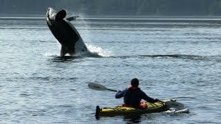Amazing Orca Dolphins leap from the water - Deadly 60 series 2 - BBC