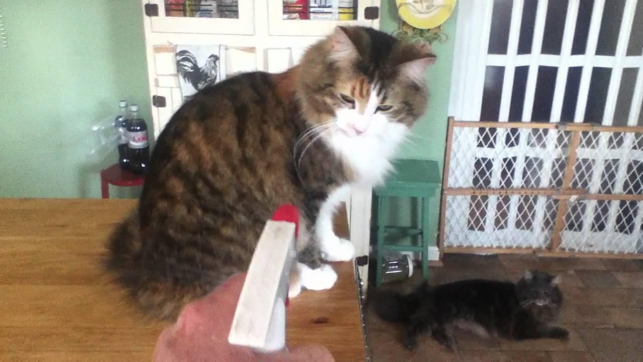 Training Cat With Spray Bottle Youtube