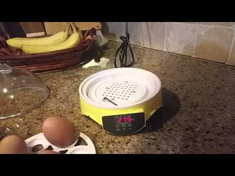 How to set up small egg incubator for home use