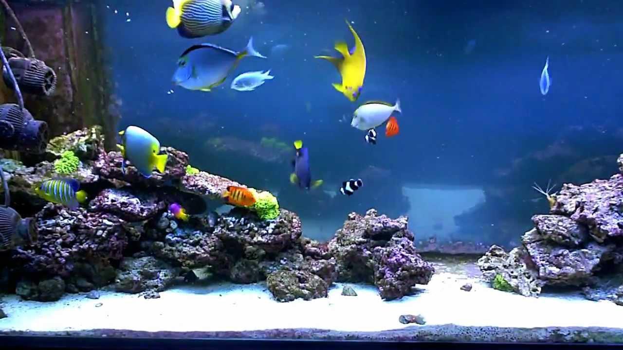 aquarium eau de mer 30l