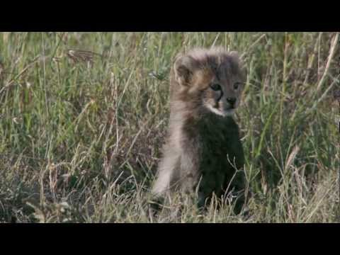 فيلم the african cats مترجم