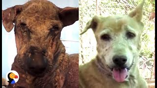 Sick Dog Who Lost All Her Fur Is So Happy Now | The Dodo