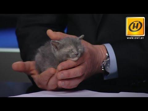 Кто сказал «Мяу»? В здании Телеканала ОНТ спасали котят