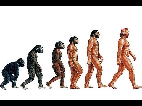 Evolution - How Stuff Works