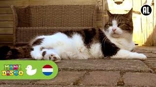 Kinderliedjes | Video | Boerderij | WAAR IS DE POES? | Minidisco | DD Company