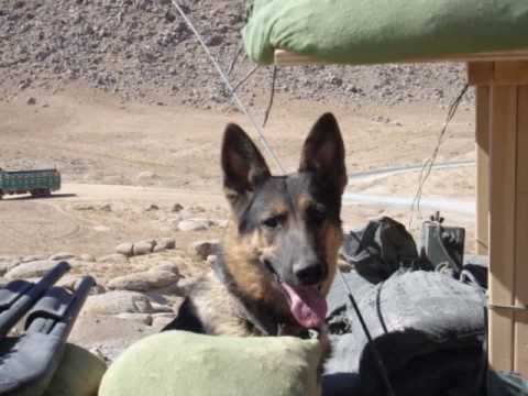 A Salute to Military Working Dogs