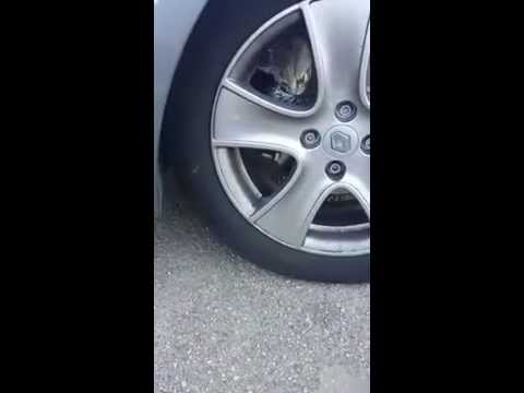 車のホイールの中に子猫?...