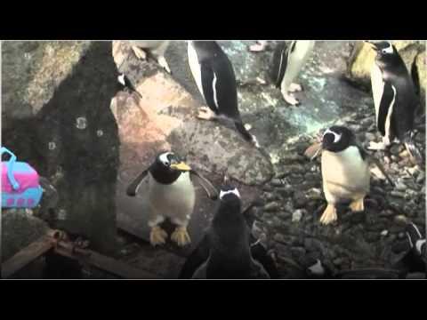 Penguin Bubble Fun!