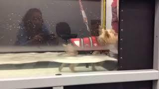 Melo Fagan Underwater Treadmill 12/14/18