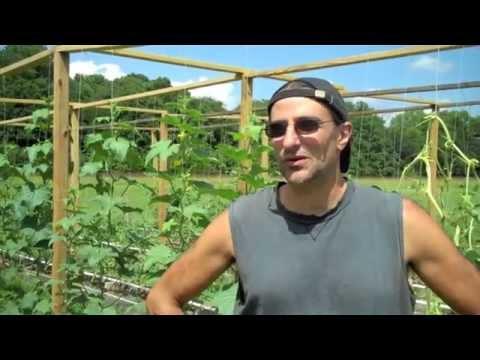 Mittleider Garden Update