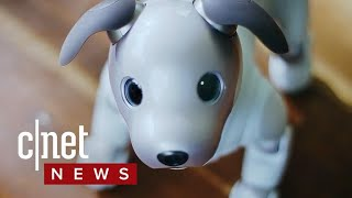 Sony Aibo robot dog returns with advanced AI (CNET News)