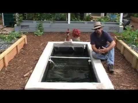How We Add Freshwater Prawns   Shrimp To Our Aquaponics System