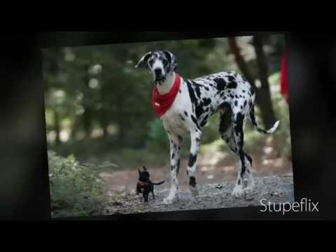 World S Popular Dogs Biggest Strongest Largest Tallest