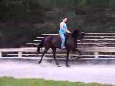 "Country Racking Mare ""UnderTakers Black Majic"""