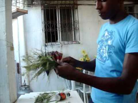 Coleiro= Ensinando a fazer ninho rolo de semente para coleiros