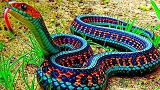 As 10 Cobras Mais Lindas Do Mundo