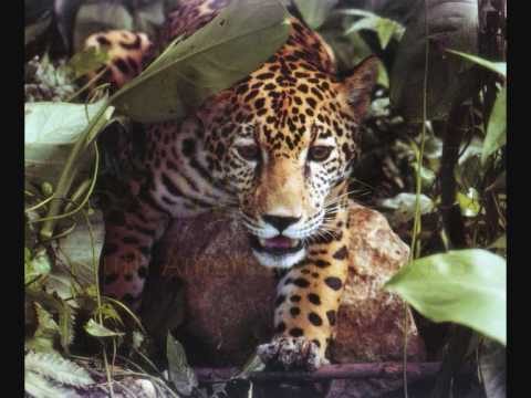 Top 10 Most Dangerous Carnivore Animals In The World