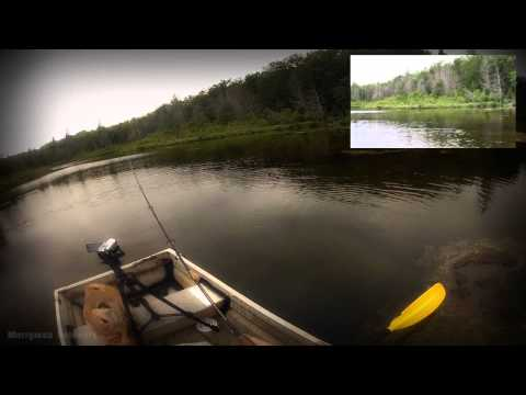 Brook Trout Fishing - Limit Of 10
