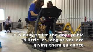 How To Treadmill for Dogs Dog Training