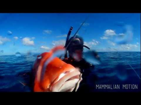 Seeing Red - Spearfishing for Red Emperor.mov