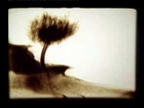 песок ( кофе ) sand_dream.wmv