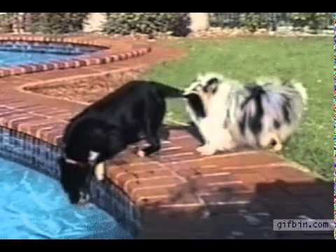 How Ti Get  Dogs To Play With Each Other
