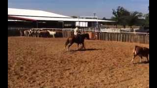 Mia- jared lesh cow horses