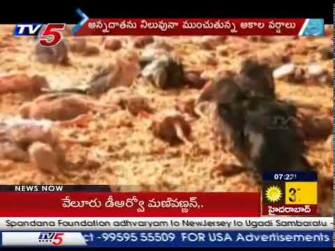 Untimely Rains Destroys Crops, Farmer Cries Over Loss : TV5 News