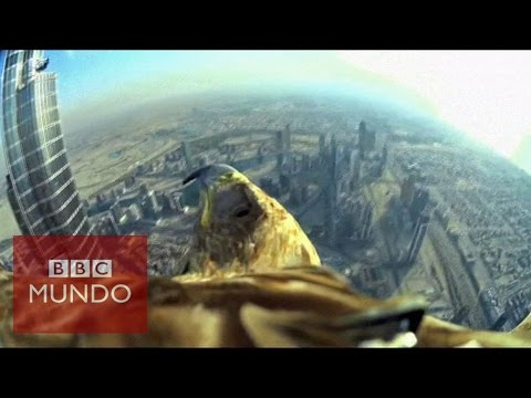 El impresionante vuelo de un águila desde el rascacielos más alto del mundo